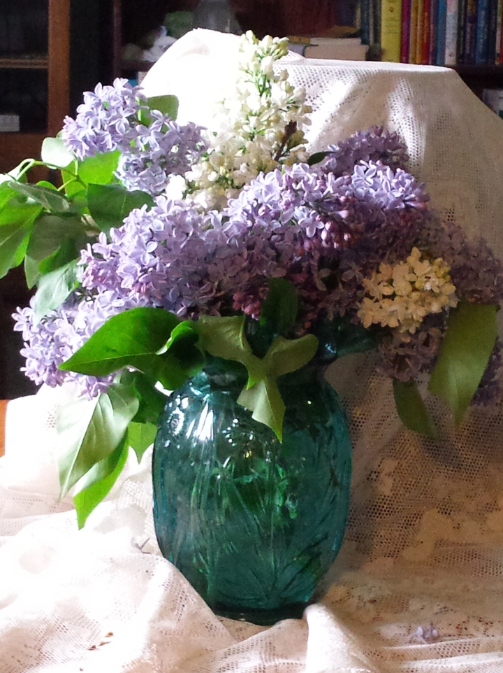 Lilacs fresh picked